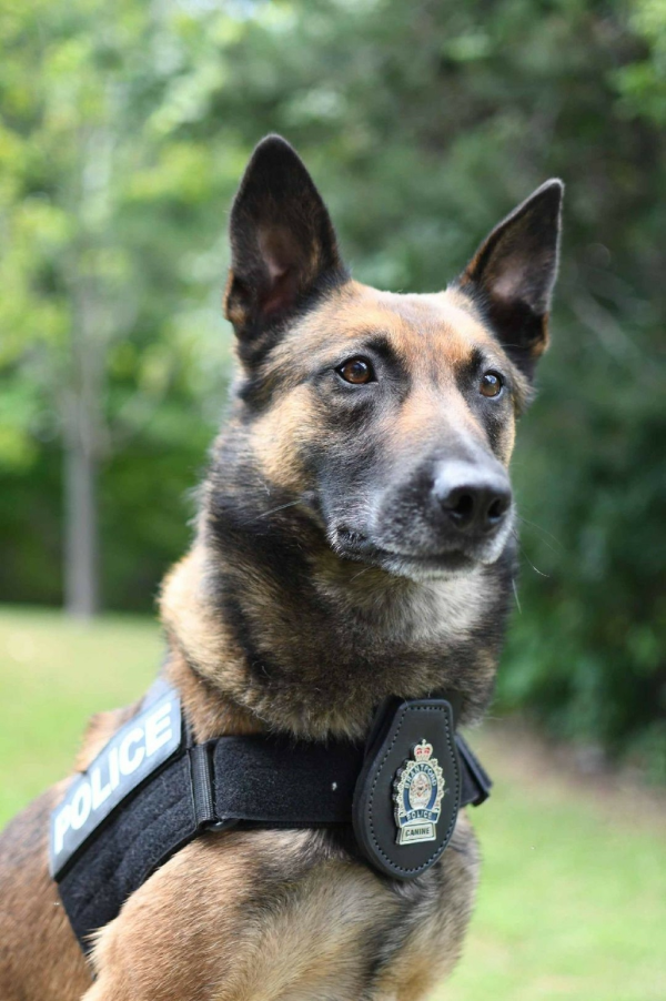 PHOTO OF PSD SCOUT